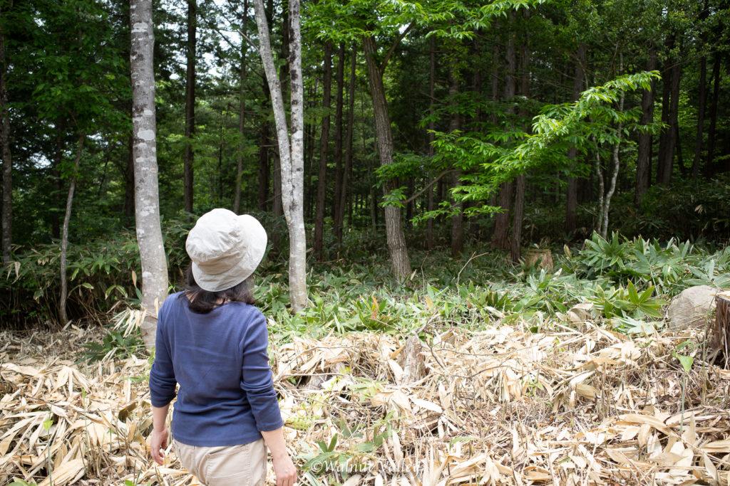 開拓に挑む木のおばさん