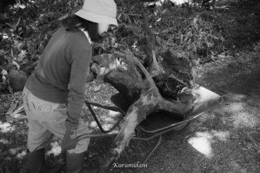 木の根っこは重い クルミ谷開拓日誌